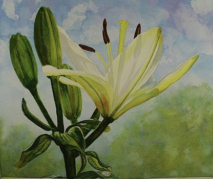 White Lily by Pat Gerace