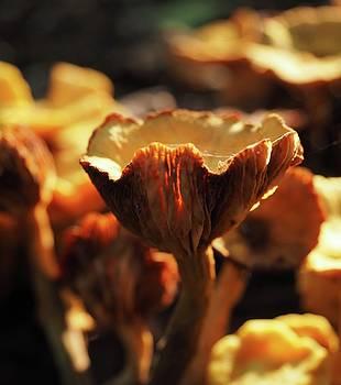 Mushrooms by Teresita Abad Doebley