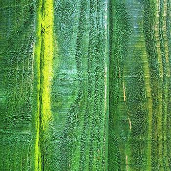 Vertical Green by Anne Kotan
