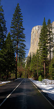 Reimar Gaertner - Vertical panorama of tall pines and the face of El Capitan from