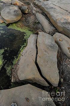 Billy Moore - Vertical Rocks and Algae