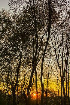 Vertical Sunrise by Kathleen McGinley