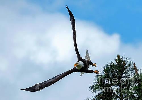 Vertical Take-off by Mike Dawson
