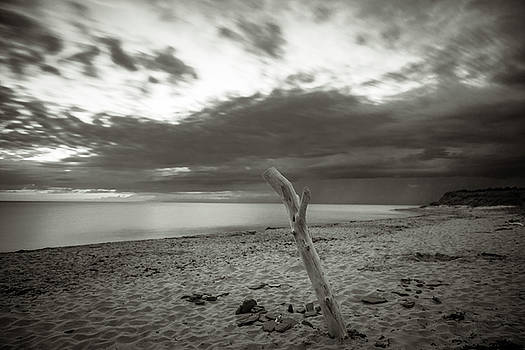 Verticale Driftwood at Cavendish Beach by Chris Bordeleau