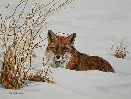 Vexed Vixen - Red Fox by Elaine Booth-Kallweit