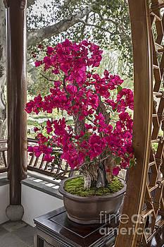 Jamie Pham - Vibrant and blooming bonsai tree.
