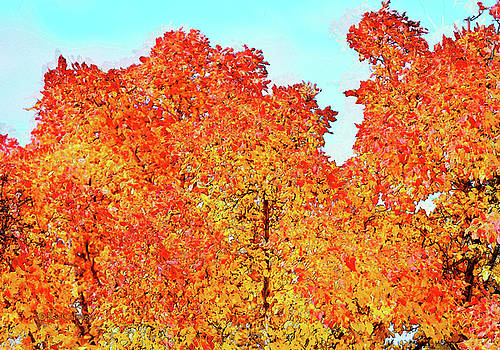 Vibrant Autum Trees by Kae Cheatham