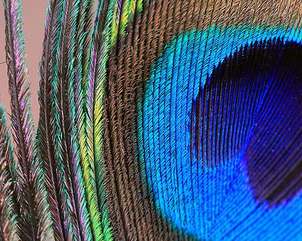 Angela Murdock - Vibrant Blue Feather