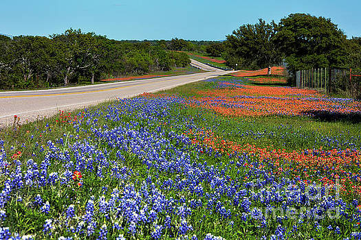 Herronstock Prints - Vibrant colorful scenic landscape of bluebonnets and Indian Pain