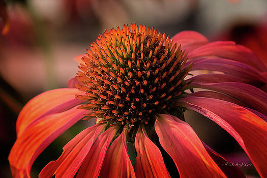 Vibrant Cone Flower by Mick Anderson