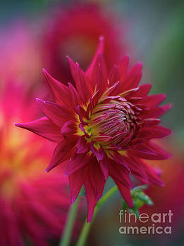 Vibrant Dahlia Garden Light by Mike Reid