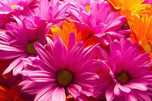 Ricky Barnard - Vibrant Daisies