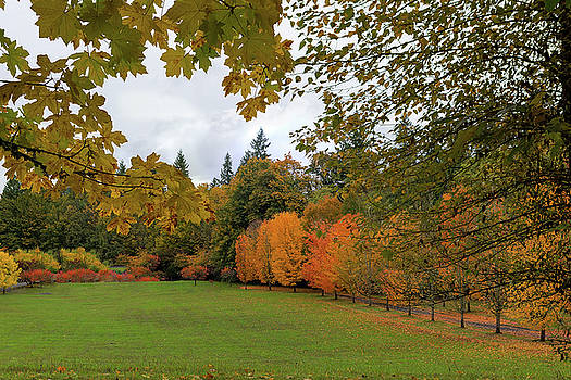 Vibrant Fall Colors in Oregon City Park by Jit Lim