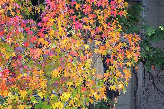 Vibrant Fall Colors by Jess Kraft