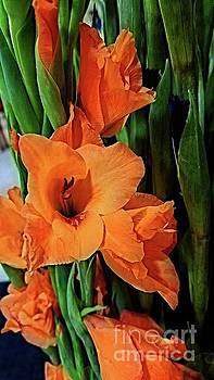 Vibrant Gladiolus by Donna Cain