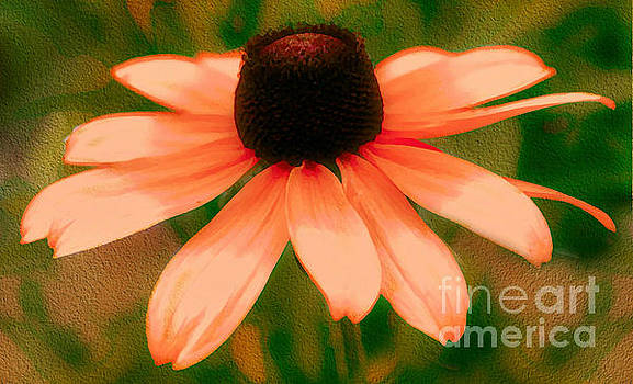 Vibrant Orange Coneflower by Judy Palkimas