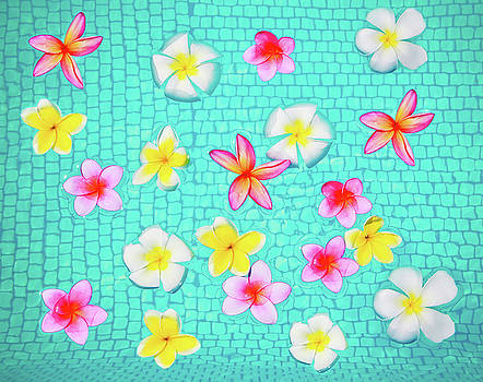 Vibrant Plumeria Party by Angelina Hills