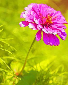 Vibrant Spring by Karen Fowler
