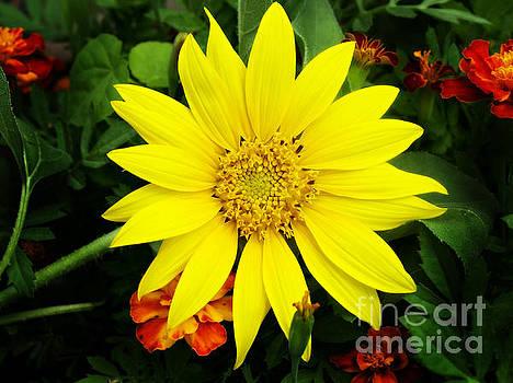 Vibrant Sunflower by Denise Irving