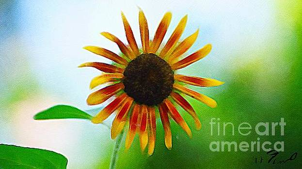 Vibrant Sunflower  by Paul Wilford
