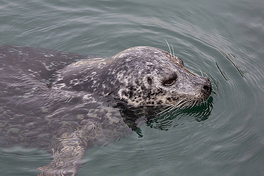 John Daly - Victoria Seal