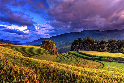Vietnamese Rice Terrace At Dawn by Pixabay