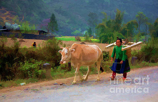 Chuck Kuhn - Vietnamese woman color cow