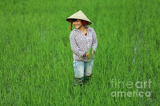 Chuck Kuhn - Vietnamese woman fields of green