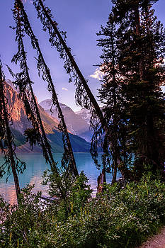 View from Behind the Trees by William Cruz