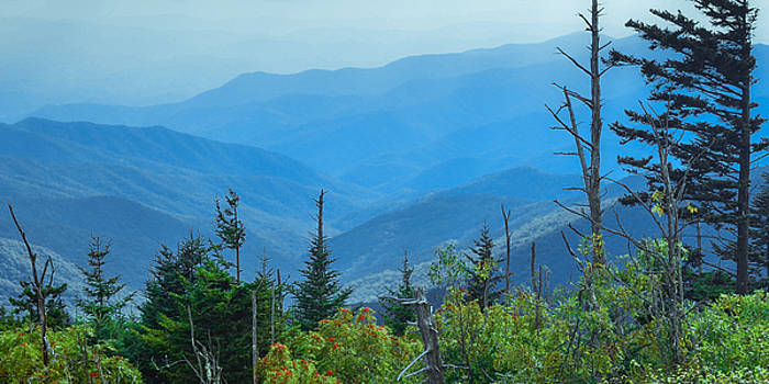 View from Higgin's Bald Trail, Mount Mitchell by Matthew MacPherson