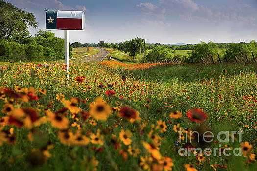 Herronstock Prints - View of a Rustic Texas flag mailbox on colorful wildflower backg
