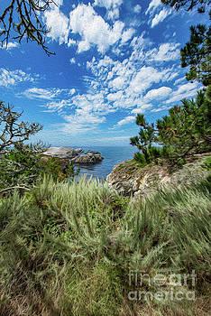 View of Bird Rock by Gregory Schaffer