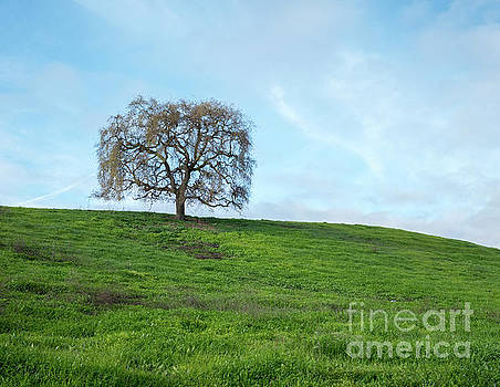 View of Dry Tree at the Top of Green Hill with Blue Skies by PorqueNo Studios
