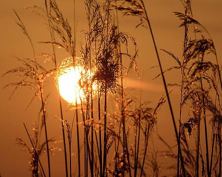 Jacek Wojnarowski - View of Sun setting behind Long Grass F