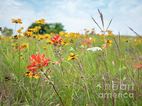 View of Various Colorful Wild Flowers with Tall Green Grass with by PorqueNo Studios