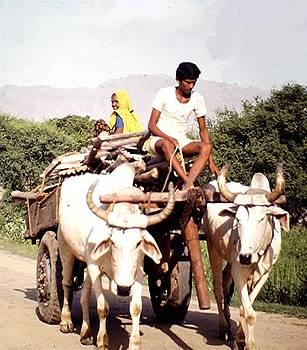 Village India by Barron Holland