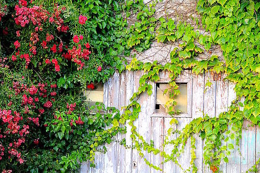 Vine Barn in Brittany France by Julia Willard