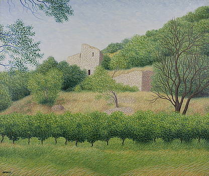 Vines on the hill of Beaumes de Venise by Raphael Seygnovert