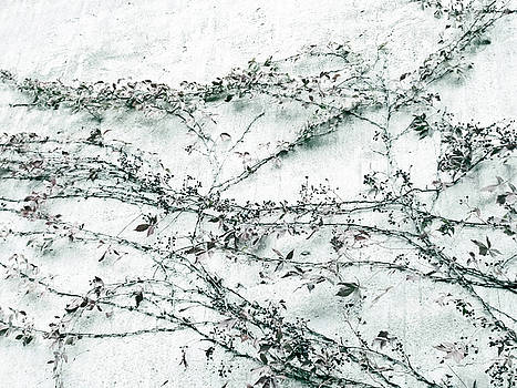 TONY GRIDER - Vines on White Wall Abstract