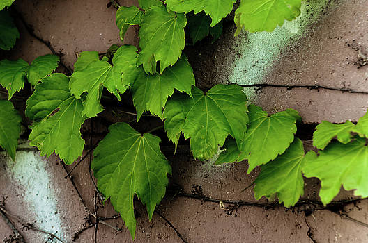 Vines5 by Kevin Heussner