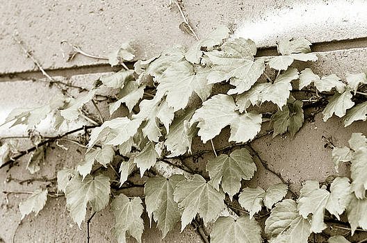 Vines8 by Kevin Heussner