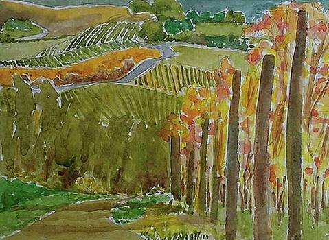 Vineyard and cultivated fields by Janet Butler