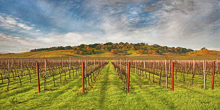 Vineyard Convergence by Kent Sorensen