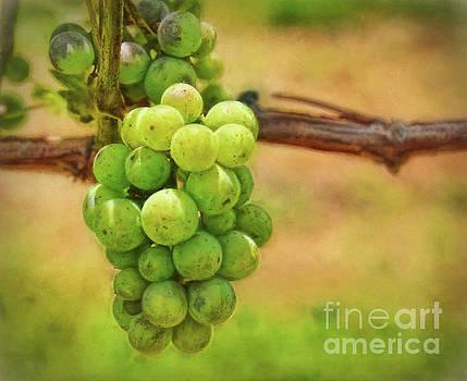 Vineyard Grapes by Kerri Farley