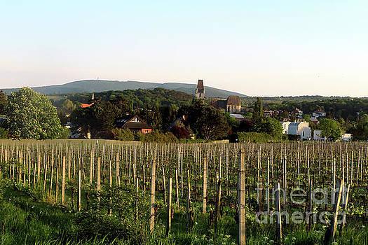 Vineyard in Austria by Christian Slanec