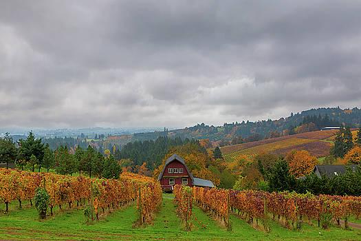 Vineyard in Dundee Oregon in Fall Season by David Gn