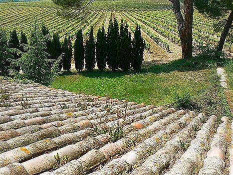 Vineyard in Spring by France Art