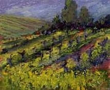 Vineyard in Spring by Kay Geis