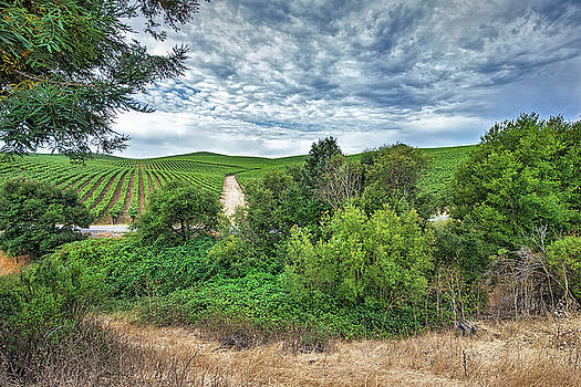 Vineyard on Cloudy Day by Kent Sorensen