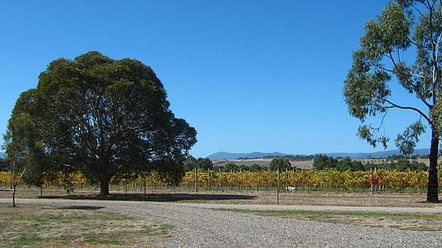 Vineyard Trees by Emma Frost